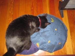 Cats & Zafus